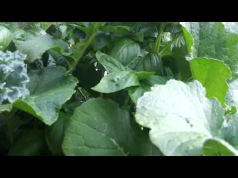 outdoor hydroponics setup