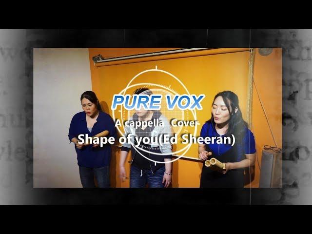 【洋楽カバー アカペラ】Ed Sheeran - Shape of You