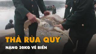 Thả rùa quý nặng 30kg về biển