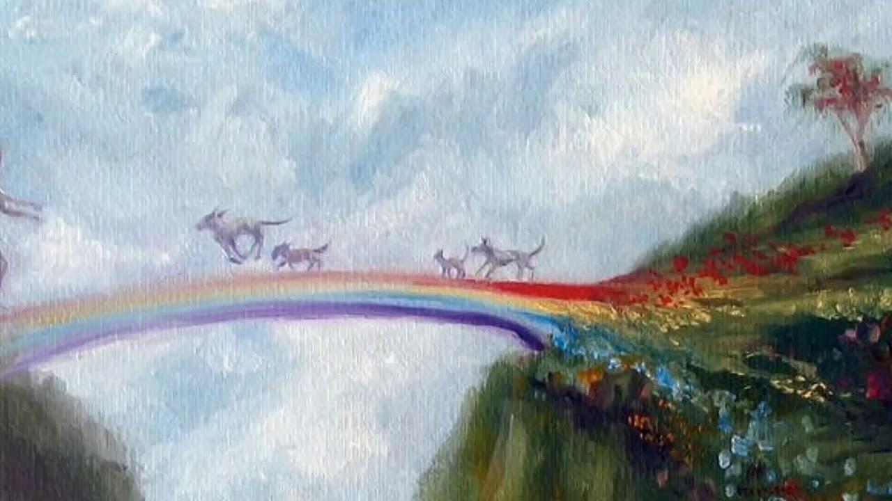 радуга собак картинки дороге парк