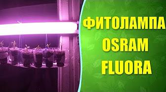 Osram fluora конопля купить шишку конопли