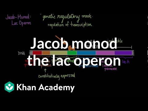 Jacob-Monod: The Lac Operon