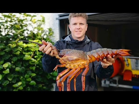 FREE-DIVING For HUGE Packhorse LOBSTER NZ- Living From The Ocean