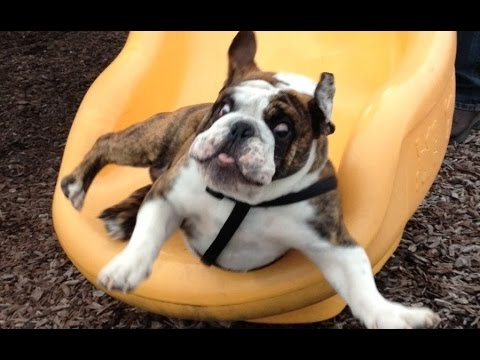 Funny Dogs on Slides Compilation 2016