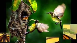 chim và bướm