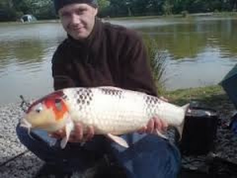 The biggest koi on earth adorable fish in japan youtube for Biggest koi fish
