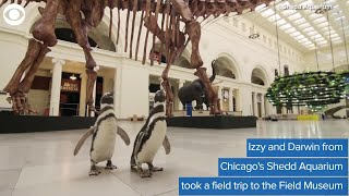 WEB EXTRA: Penguins Take Field Trip To Museum