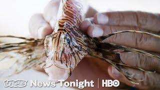 Lionfish Invasion & India's Amazon Launch: VICE News Tonight Full Episode (HBO)