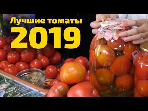 Выращивайте помидоры сами! «Мичурин-томаты» - результаты проекта 2019