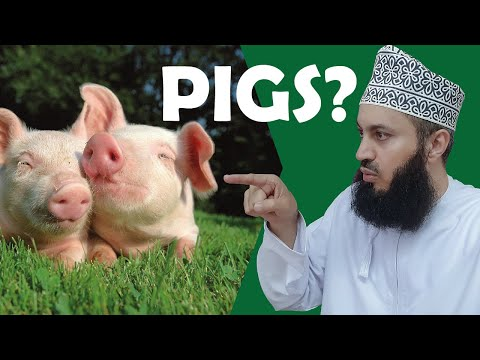 Why be kind to PIGS and DOGS??? - Mufti Menk