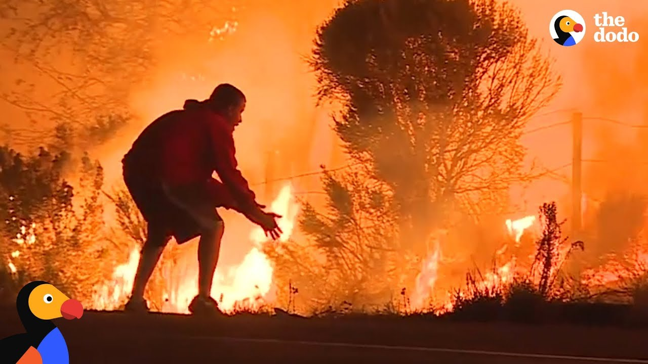 People Rescuing Animals From California Wildfires