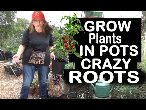Growing LARGE Vegetable Plants In Pots Container Gardening Too EASY
