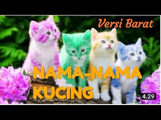 Nama Nama Kucing Nama Nama Kucing Yang Bagus Versi Barat Youtube