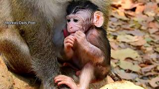 Wow,morning health check! adorable baby monkey Valentin look strong & healthy in this morning,