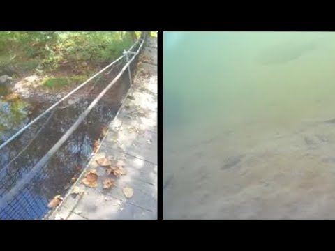 Underwater episode 20: Spring Lake N.A., Streator IL (site17,location1)