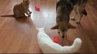 Тест на интеллект домашних животных
