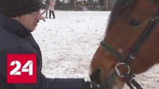 Архангельский конный клуб, где проводится иппотерапия, получил президентский грант - Россия 24
