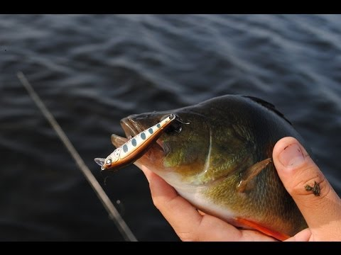 Видео рыбалка поймать окуня