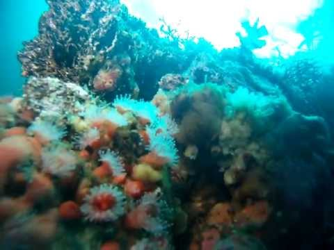 Scuba diving at Cathedrals in Carmel, CA