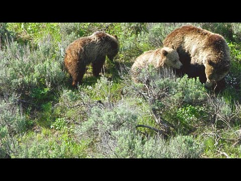 Why Yellowstone Can be a Magnet for Deadly Misadventures