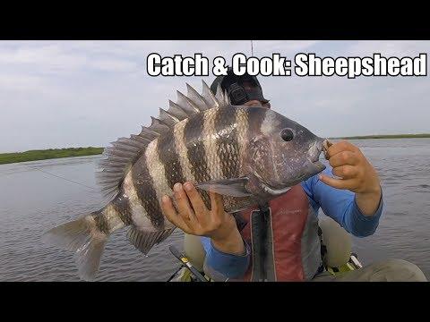 CATCH & COOK: Sheepshead (POOR MAN'S LOBSTER)