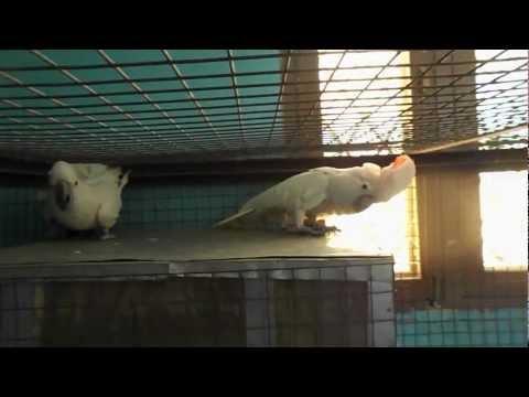 BIRD'S FOR SALE IN INDIA pet world bilaspur bird's