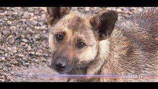 В Пензе выделено бесплатное здание для собачьего приюта