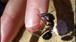Скачать Top 7 Peores Picaduras De Insectos FULL TOPS