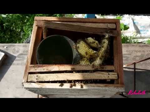 Honeybees in our farm - Best pollinators for fruiting plants