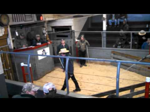 Belleville PA Livestock Auction - selling feeder pigs
