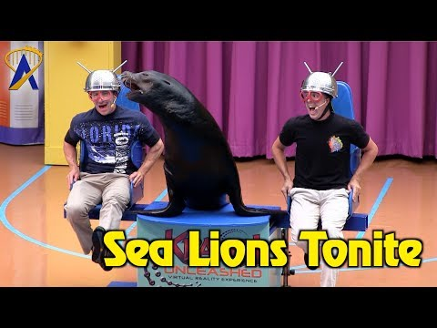 Sea Lions Tonite - Full Show during Electric Ocean at SeaWorld Orlando