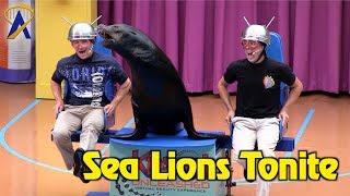 Sea Lions Tonite - Full Show during Electric Ocean at SeaWorld Orlando