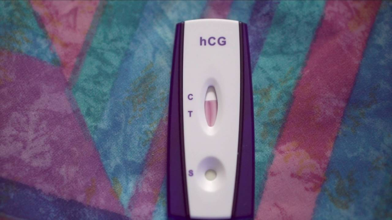 Can I Use A Home Pregnancy Test On My Dog