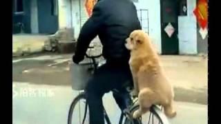 Spacy.Tv - Собака сидит на багажнике велосипеда