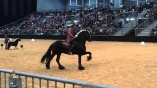 Выездка-барокко, 1 место, Ганноверская конная выставка 2015