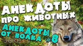 Анекдоты про животных. Анекдоты от Волка #8