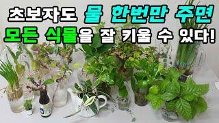 수십가지 식물들 수경재배 로 쉽게 키우는방법!!  Ev…
