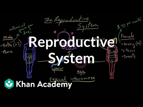 Welcome to the reproductive system | Reproductive system physiology | NCLEX-RN | Khan Academy