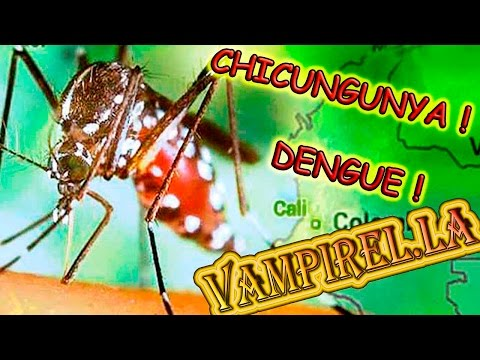 Mosquitos propagan nuevos virus(chicungunya y dengue)