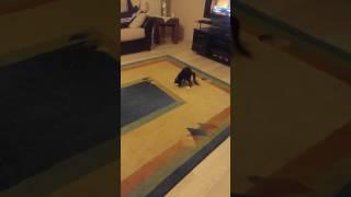 Zeytin kedi oyun oynuyor