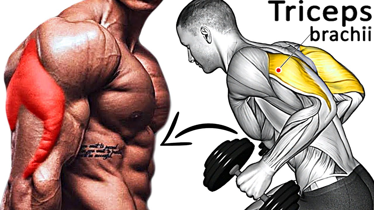 How To Build Massive Triceps (8 Best GYM Exercises)