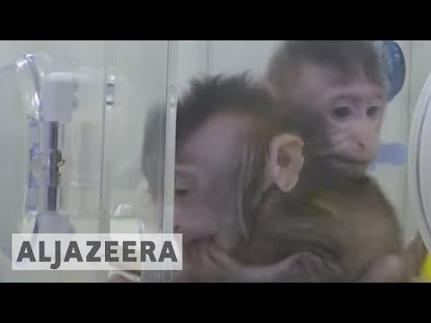 🇨🇳 World's first monkey clones created in China