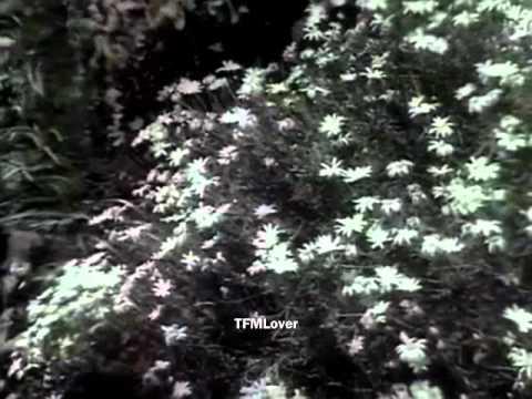 Thendral Varum -Sarojadevi-P Susheela --unused song from Paalum Pazhamum