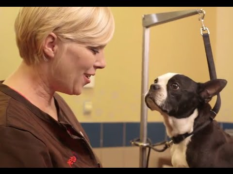 how-to-cut-your-dog's-nails-(petco)