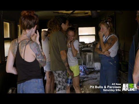 'Pit Bulls & Parolees' clip: 'Midnight Savior'
