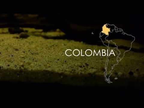 Colombia Biotope: Awaous Flavus & Eigenmannia Virescens