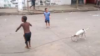 Собака в Бразилии играет с детьми