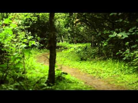 Blackberry Wood Campsite