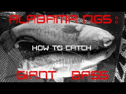 Alabama Rigs: How To Catch Giant Bass