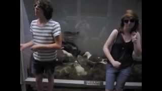 PLASMA SEAGULL D!SCOTHEQUE - Blackbird (Remix)